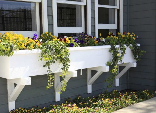 Best Window Boxes and Planters