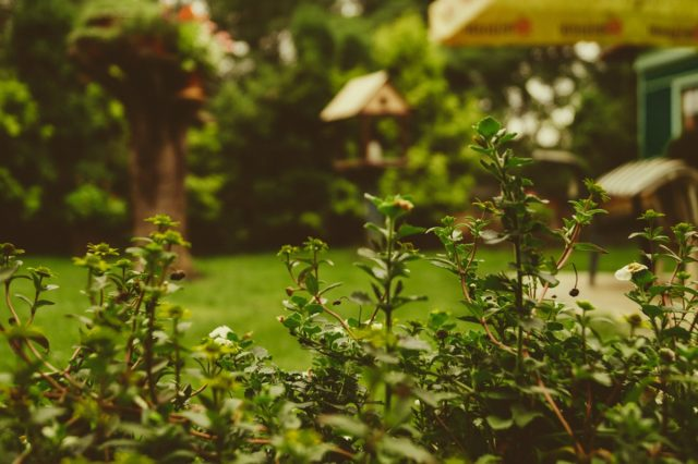 Great backyard features and activities that have health benefits